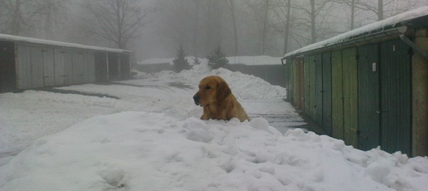 A dog out in the snow in cold weather
